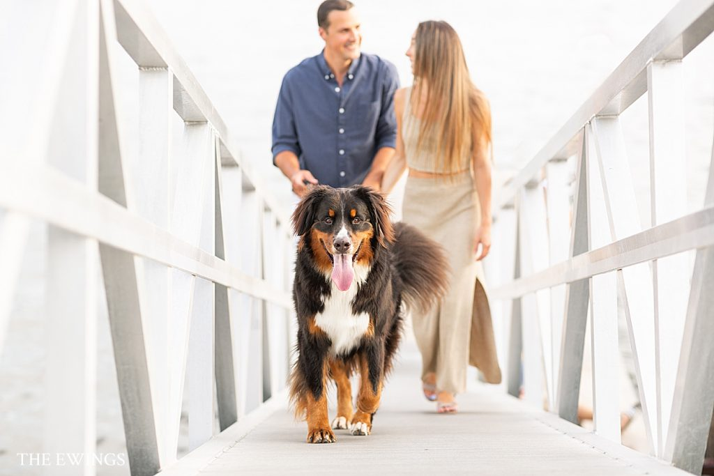 A fun engagement session idea for people with dogs is to bring the dog to the session! This East Boston couple brought their Bernese Mountain Dog for part of their engagement pictures.