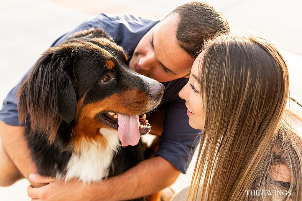 A puppy engagement session! This bride and groom brought their dog to their engagement shoot in East Boston.