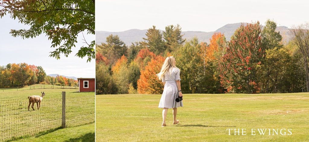 White Mountains wedding photographer at Mountain View Grand.