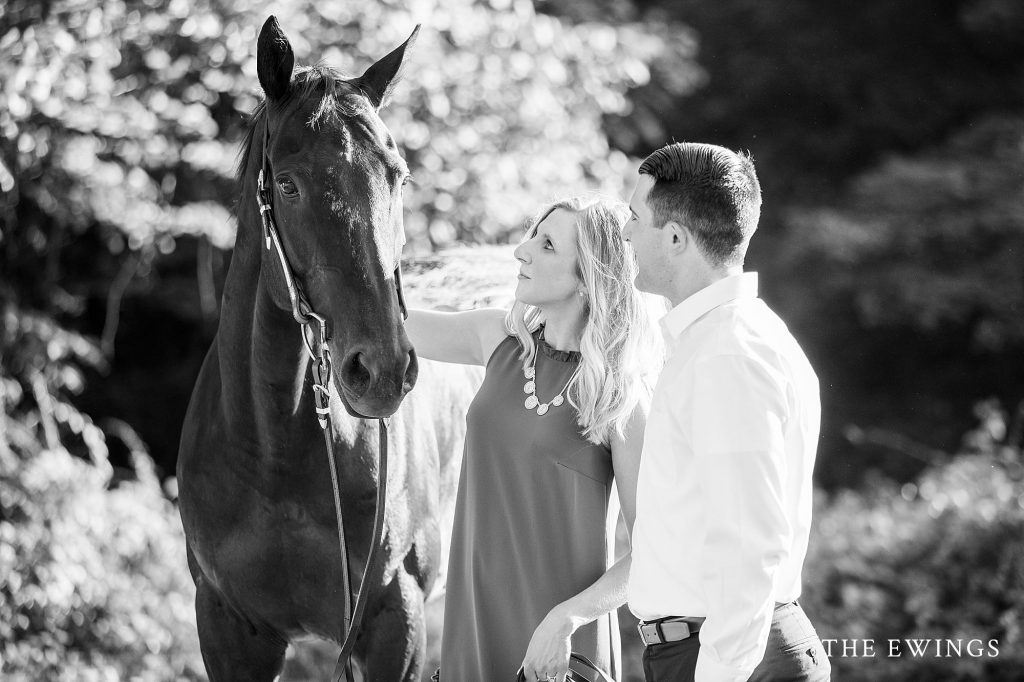 Horses at Moore State Park for an engagement portrait session in Paxton MA.